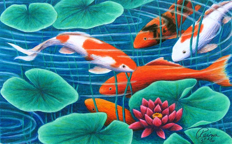 Pond drawing for Koi fish pond drawing
